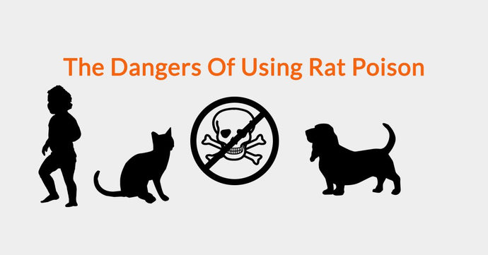 The Dangers Of Using Rat Poison