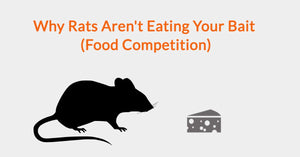 Why Rats Aren't Eating Your Bait (Food Competition)