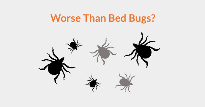 Worse Than Bed Bugs?