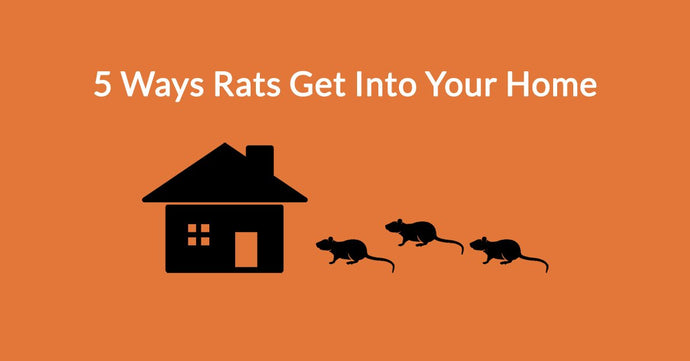 5 Ways Rats Get Into Your Home