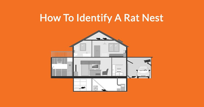 How To Identify A Rat Nest