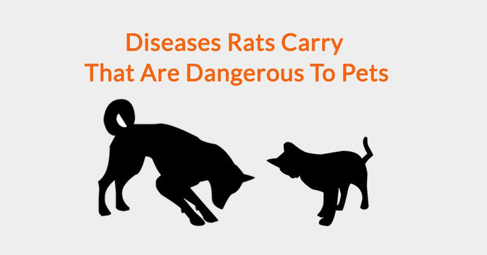 Diseases Rats Carry That Are Dangerous To Pets