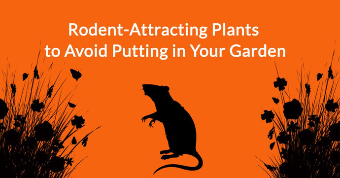 Rodent-Attracting Plants to Avoid Putting in Your Garden