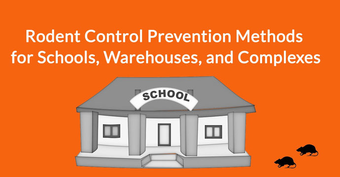 4 Rodent Control Prevention Methods for Schools, Warehouses, and Complexes