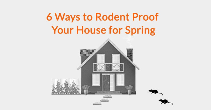 6 Ways to Rodent Proof Your House for Spring
