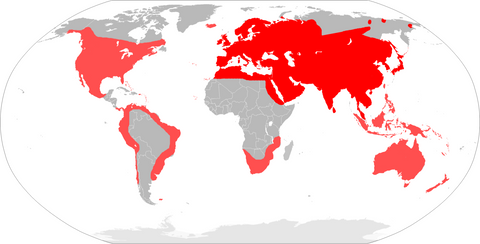 House Mouse Around The World