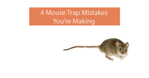 4 Mouse Trap Mistakes You're Making – Automatic Trap Company
