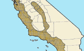 California mouse region