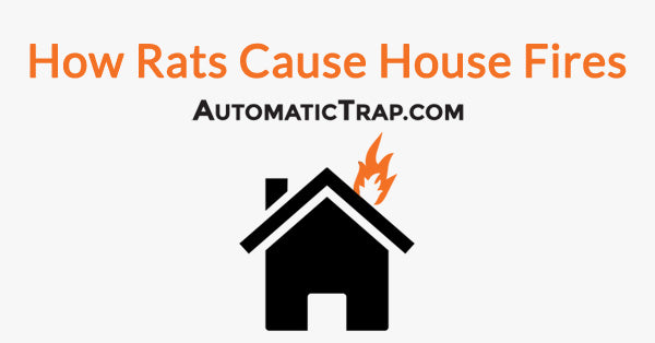 How Rats Cause House Fires