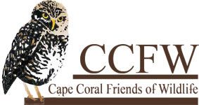 Cape Coral Friends of Wildlife