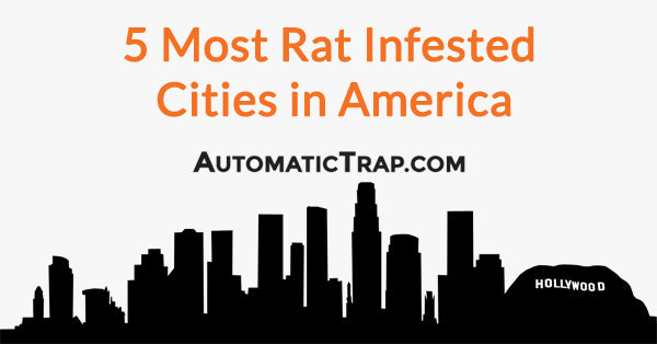 5 Most Rat Infested Cities in America