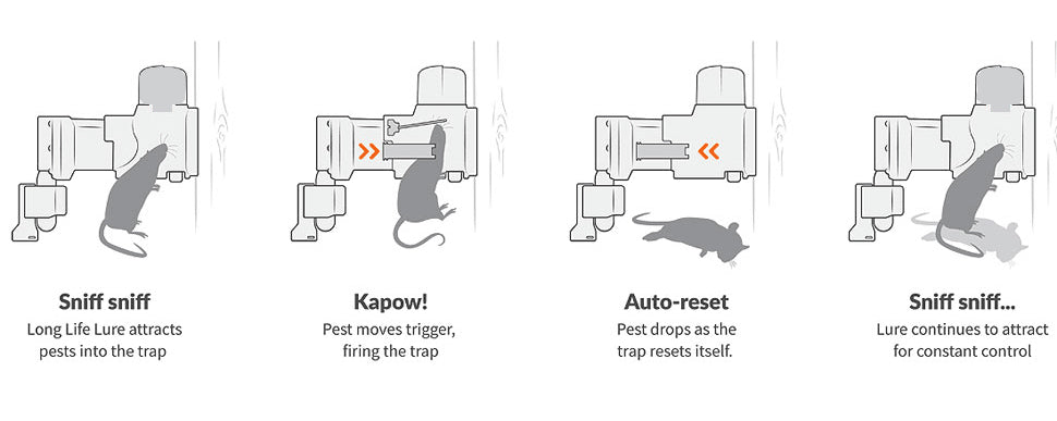 How the A24 Rat Trap works