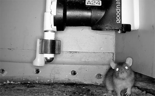 A24 Rat and Mouse Trap