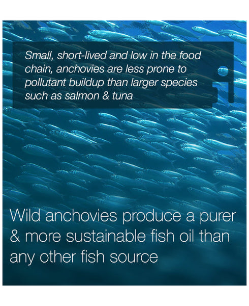 Water - WHY FISH OILS AREN'T ALL THE SAME