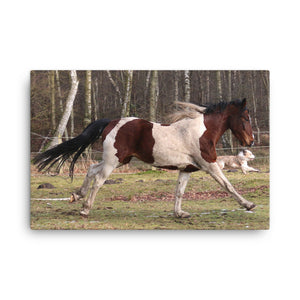 Saw The Lights Horse Art Canvas