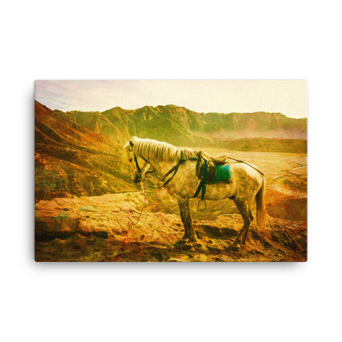 Tortoise Jumped Horse Art Canvas