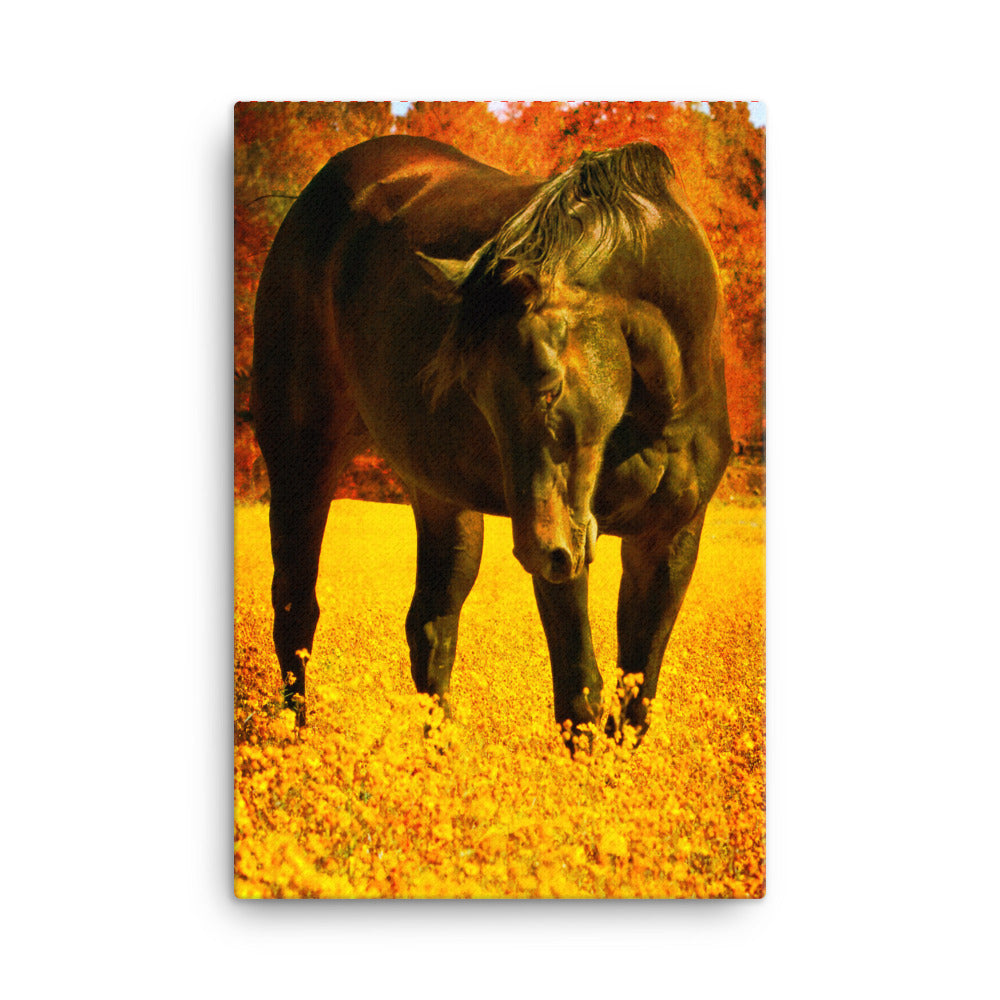 Not Noisy Horse Art Canvas