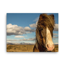 Horse in the wind Canvas Print