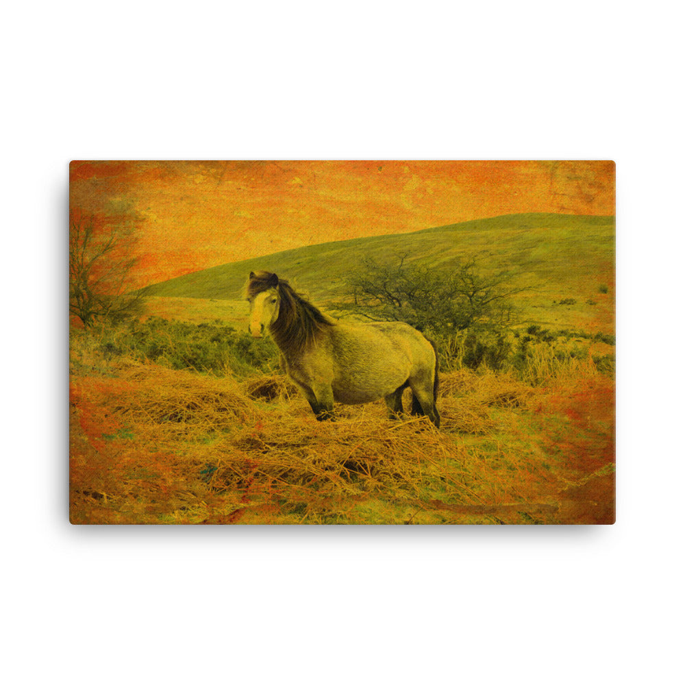 Favorite Country Horse Art Canvas