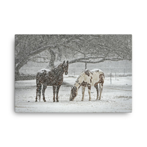 Really On Steroids Horse Art Canvas