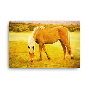 Sound Of Nails Horse Art Canvas