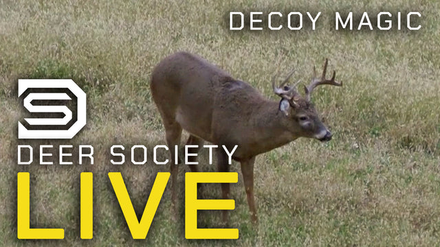 Decoy works like Magic on Big Buck!