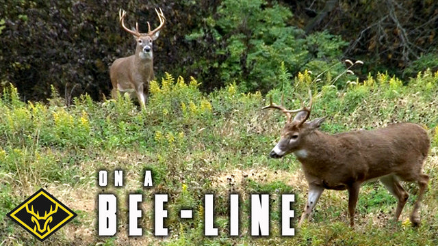 Bucks on a Bee-Line