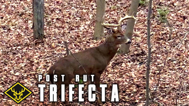 Post-Rut Trifecta: 3 Bucks called in!