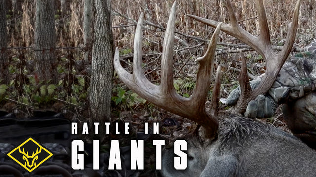 Rattle in GIANTS!