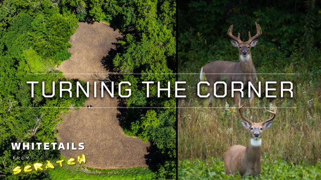 Turning the Corner: Whitetails from Scratch (Episode 3)