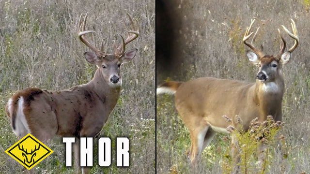 The Hunt for THOR : The tale of TWO identical bucks...