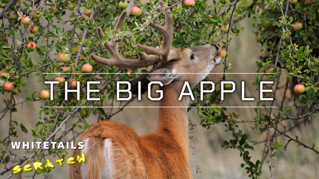 THE BIG APPLE: Maximizing Fruit Tree Production for Big Bucks!