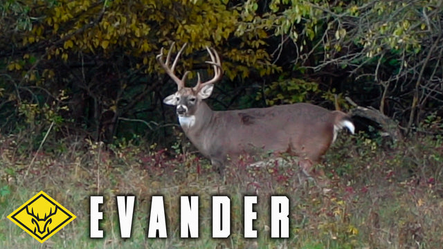 EVANDER | A GIANT Kansas buck is on the ground!
