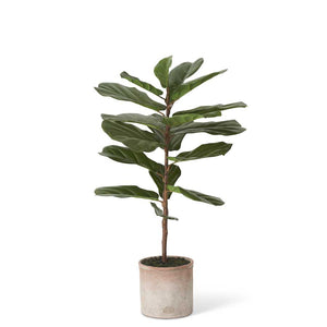 36 Inch Fiddle Leaf Fig Tree in Distressed Clay Pot