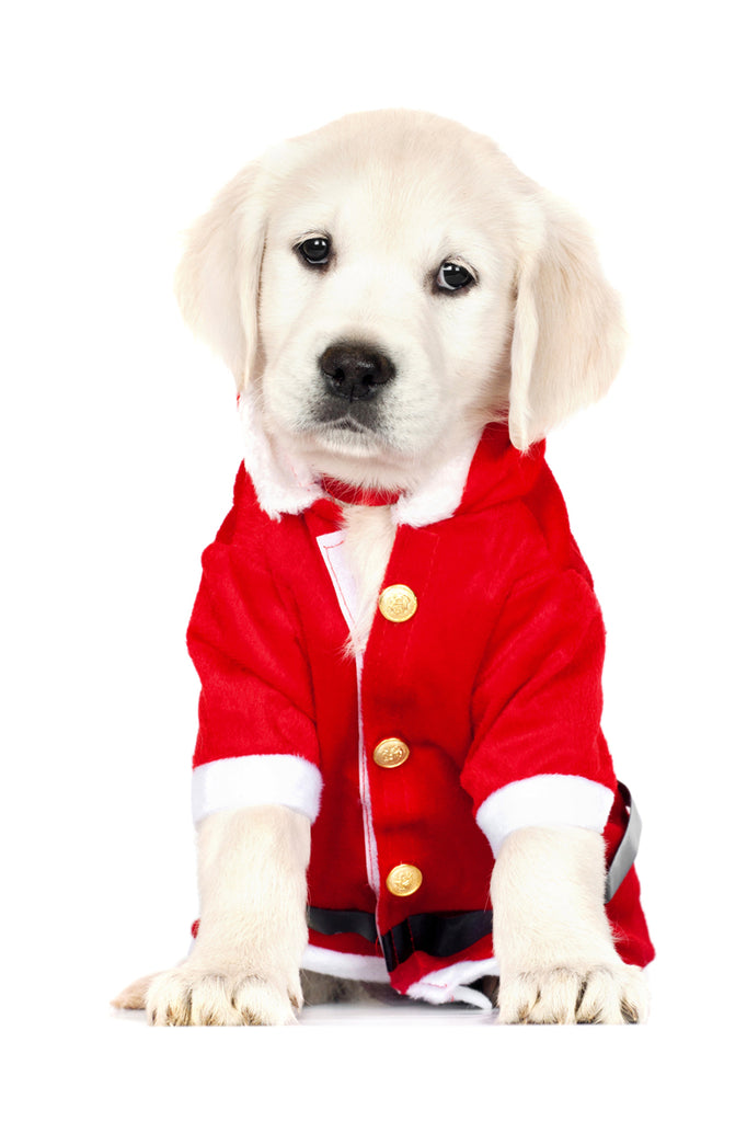 Small Dog Santa Suit