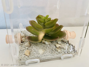 Artificial Succulent Plant 3 Decoration
