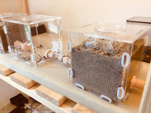 Formica Earth Cube Ant Nest Farm Arena