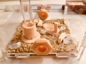 Natural Ant Habitat Kit - Small All-In-One
