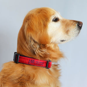 PMC Dog Collar