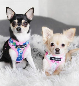 designer-pet-acessories-posh-pawz-fashion