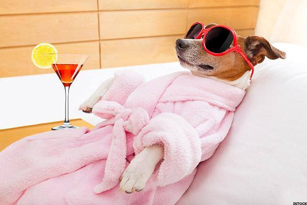 dog-bathrobes-pyjamas-poochie-fashion