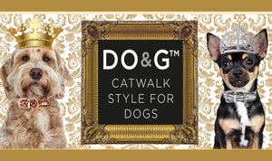 luxury-dog-collars-posh-pawz-fashion
