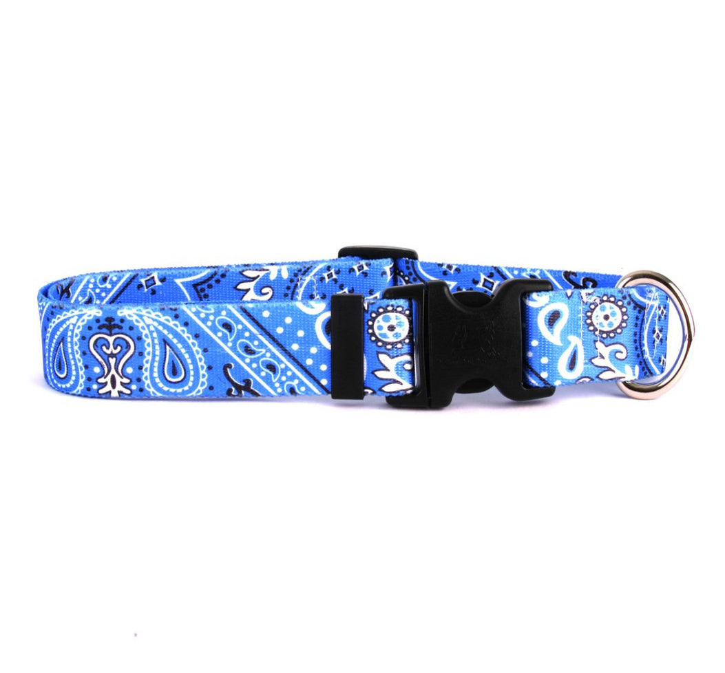Cool Paisley Adjustable Designer Dog Collar - Posh Pawz Fashion