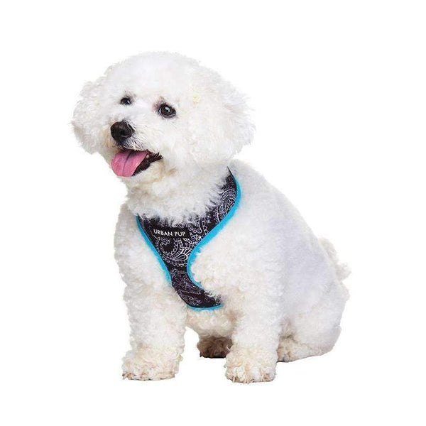 Black and Blue Paisley Designer Dog Harness - Posh Pawz Fashion