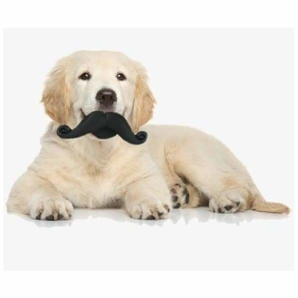 Funny Face Moustache Squeaky Dog Toy - Posh Pawz - 2