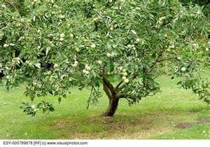 Fruit Tree Pruning Resources and Videos