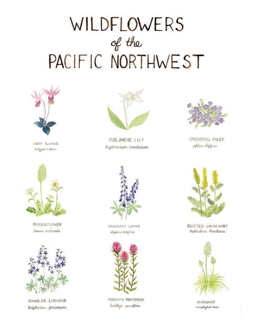 PNW Wildflowers Art Print