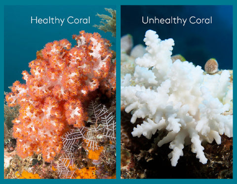 Coral reef bleaching - before and after