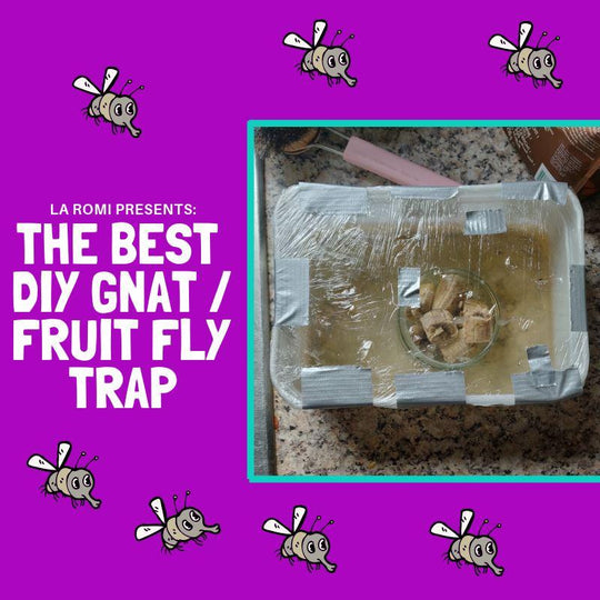Make A Homemade Fruit Fly Trap | La Romi | Baby Fashion