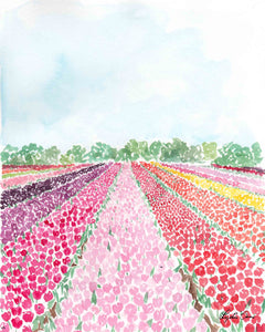 tulip fields watercolor art print